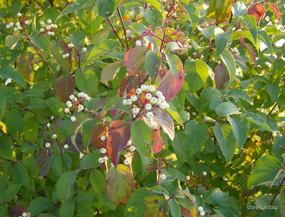 White Berry Bush by steelwidow