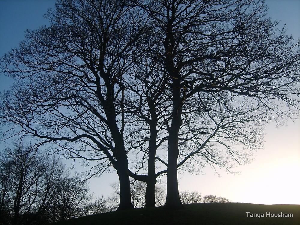 Tree silhouette by Tanya Housham