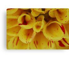 Yellow Macro Canvas Print