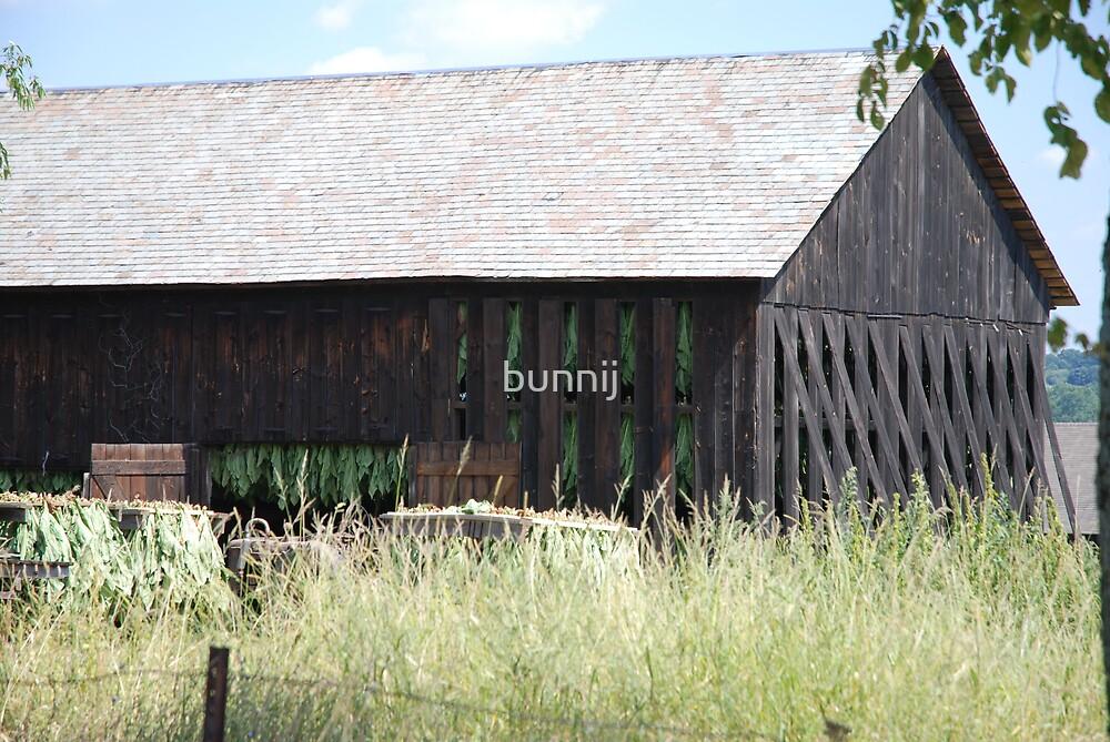 Tobacco Barn by bunnij