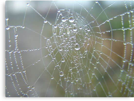 diamonds on web 2 by Sean Farragher