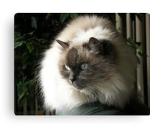 Fur Ball Canvas Print
