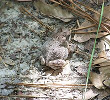 Camo the frog by Chris Alsup
