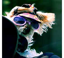 #204  Doggie Biker  #2 Photographic Print