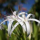 Dreamy Flowers  by JAHphoto