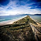 The Neck, Bruny Island by Kelly McGill