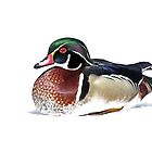 Wood Duck - High Key by Jim Cumming