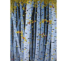 Ten Cardinals In Birch Trees Photographic Print