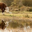 Cattle on the Common - Greenham by Samantha Higgs