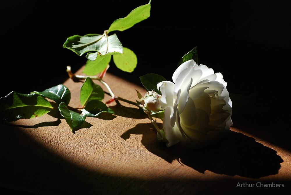 ROSE TO REMEMBER  an opera legend............ by Arthur Chambers