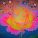 Rose color blast by ♥⊱ B. Randi Bailey