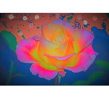 Rose color blast Photographic Print
