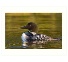 Evening Loon - Common Loon Art Print