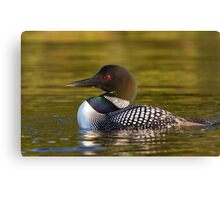 Evening Loon - Common Loon Canvas Print