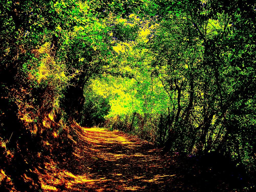 Lane by honey