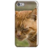 Cute sleepy cat iPhone Case/Skin
