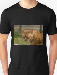 Cute sleepy cat T-Shirt