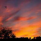 Swallow Sunset by desertman