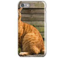 Adorable cat yawning iPhone Case/Skin