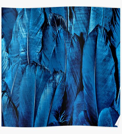 Blue Feather Close Up Poster