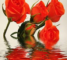 roses by cynthiab