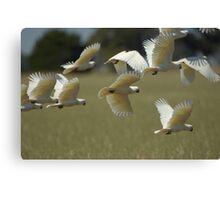 Flying Marauders Canvas Print