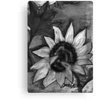 Oil Sunflower 2 Black and White  Canvas Print
