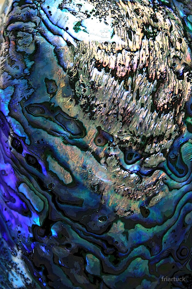 Abalone by friartuck