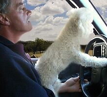 "☸•°*""˜SIT BACK AND RELAX - LET ME SHOW U HOW TO DRIVE CANINE STYLE--INCLUDED IS MY WRITTEN POEM""*°•☸ by ✿✿ Bonita ✿✿ ђєℓℓσ"
