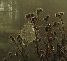 Web and Thistle by Erica Corr