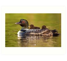 Once around the lake please - Common Loon Art Print