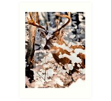 Winter Wonder 2 Art Print