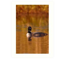 On Golden Pond - Common Loon Art Print