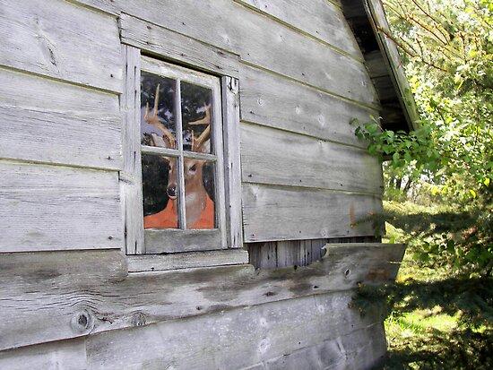 Deer Camp by Maria Dryfhout