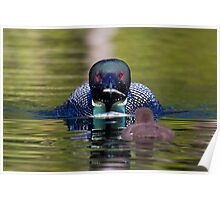 Take-out finally arrives - Common Loon - Buck Lake, Ontario Poster
