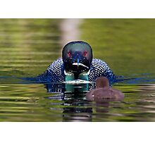 Take-out finally arrives - Common Loon - Buck Lake, Ontario Photographic Print