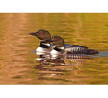 Taking a quick break - Common Loons Photographic Print