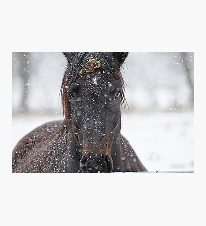Horse in Snowstorm Photographic Print