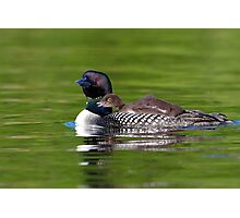 Bucky! - Common Loon Photographic Print