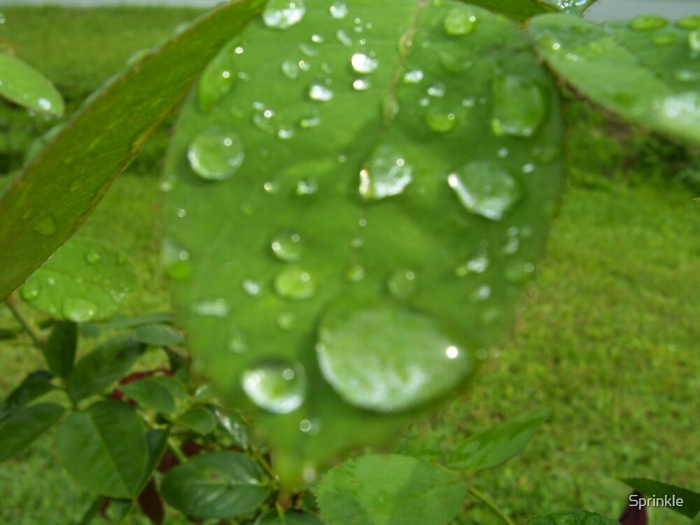 Refresh us Like Rain by Sprinkle