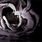 Rose by dedakota
