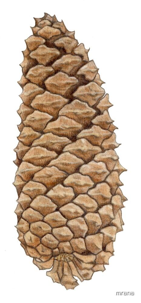 Pine Cone by Mariana Musa