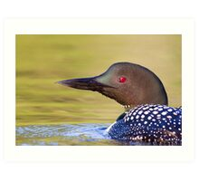 Closeup Common Loon Art Print