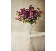 Lilacs in white flowerpot Photographic Print