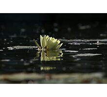 Lily Dip Photographic Print