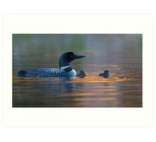 Spotlight - Common Loon Art Print