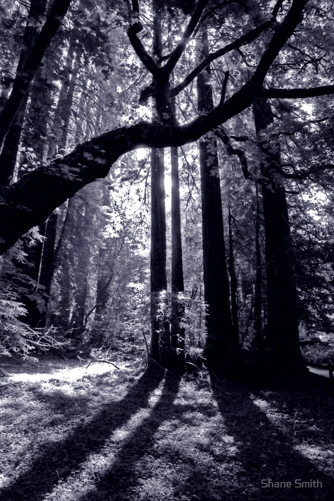 Ghostly Light- Muirwoods by Shane Smith