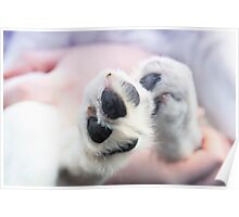 Puppy paws in pastel colours Poster