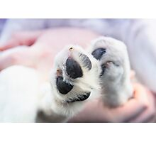 Puppy paws in pastel colours Photographic Print