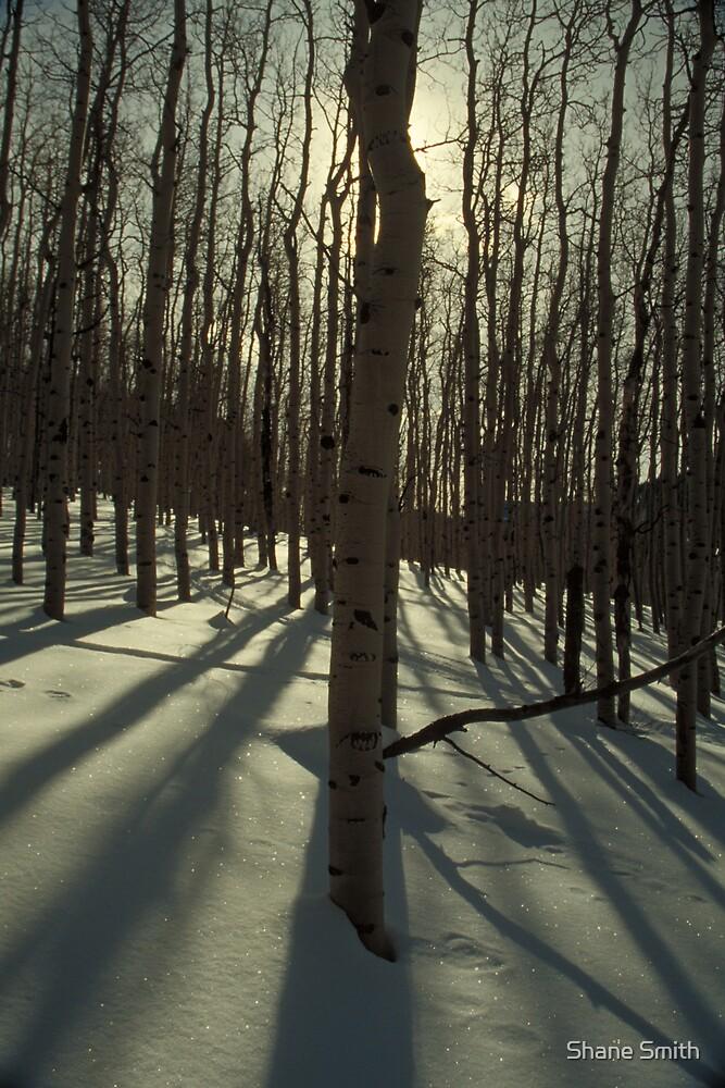 Sunrise Aspens by Shane Smith